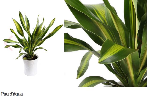 espécie de plantas para escritório ou consultório