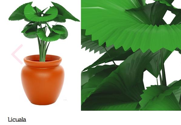 espécie de plantas para escritório ou consultório 9