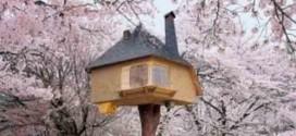 Modelos de casas na árvore ao redor do mundo