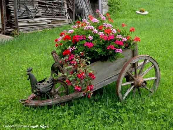 Carrinho de mão na decoração do jardim 011