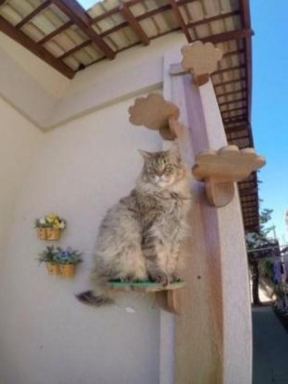 Escadas para gatos nas paredes 014