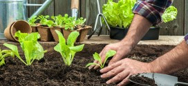 Dicas para fazer uma horta em casa
