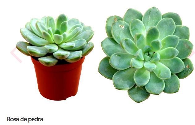 espécie de plantas para escritório ou consultório 2