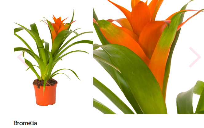 espécie de plantas para escritório ou consultório 4