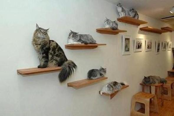 Escadas para gatos nas paredes 006