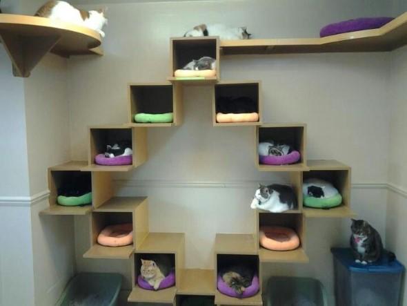 Escadas para gatos nas paredes 015