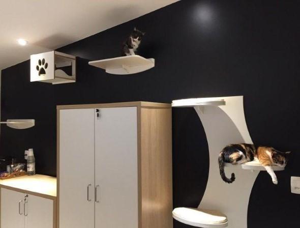 Escadas para gatos nas paredes 017